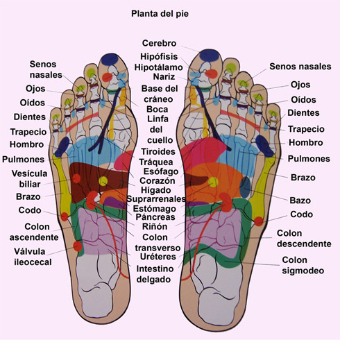 Mapa reflexologia podal organos